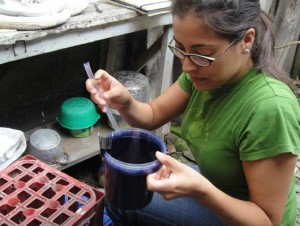 Anna Stewart Ibarra inspects an ovitrap in the patio of a study household to look for Aedes aegypti mosquito eggs. Ovitraps were monitored over a period of eight months to estimate Aedes aegypti populations, the mosquito that transmits the disease dengue fever.