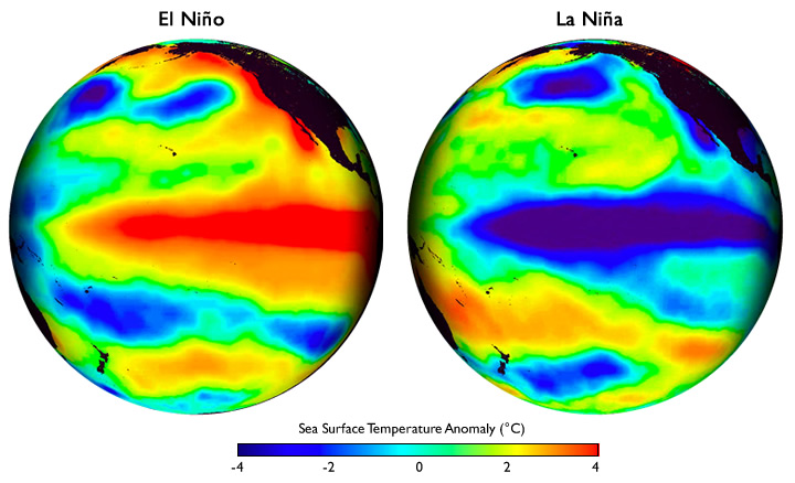 These global maps centered on the Pacific Ocean show patterns of sea surface temperature during El Niño and La Niña episodes. The colors along the equator show areas that are warmer or cooler than the long-term average. Image courtesy of Climate.gov
