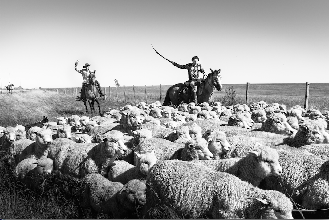 Sheepherding in southern Uruguay. Francesco Fiondella