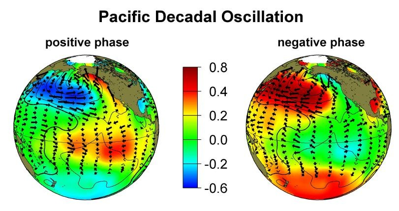 Figure 3: The two phases of PDO as exhibited by sea surface temperature patterns in the Pacific. Click image to enlarge. Source: source: http://research.jisao.washington.edu/pdo/graphics.html