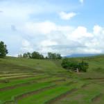 Farmland in the Bicol region, Philippines. Photo by Erica Allis
