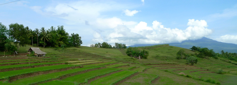 Farmland in the Bicol region, Philippines. Photo by Erica Allis