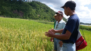 An agricultural technician talks about integrated pest management to farmers at a climate field school in the Philippines. Francis Faderogao.