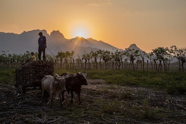 Farmers in Honduras. Photo: Elisabeth Gawthrop/IRI