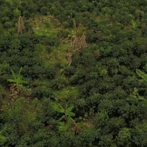 An aerial shot of a partial shade coffee farm on a hillside near Dosquebradas, Colombia.