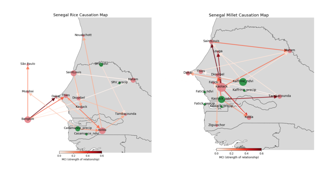 This image contains two grey maps of Senegal crisscrossed with red lines between cities. Some of the cities have red circles and others green circles. These causation maps demonstrate how food prices in different markets (red circles) influence one another in Senegal. Also shown is the influence of regional precipitation and vegetation condition (green circles) for (a) imported rice and (b) domestically grown millet. For example, Bangkok has the strongest links to rice prices in the markets of Dakar and Thies, which are both located near a major international port. Millet prices in Kaolack have a strong influence on most markets throughout Senegal. In terms of environmental variables, the vegetation state (as measured by the normalized difference vegetation index, NDVI) in the Kaolack region influences prices in Tambacounda and other markets outside the growing region.